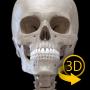 icon Skeleton   3D Anatomy